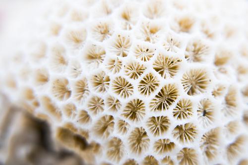 サンゴカルシウム