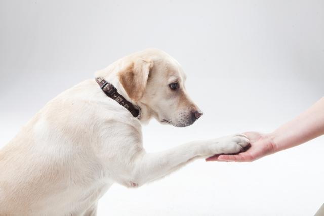 犬 癌 症状