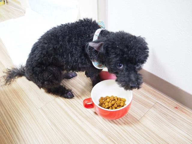 犬 癌 食事