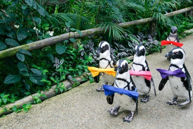 ペンギンの日 由来