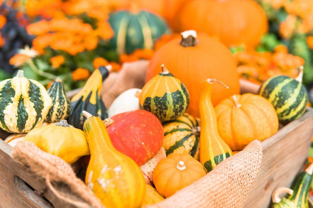 かぼちゃの保存について:適した温度・わたは取るほうがいい?